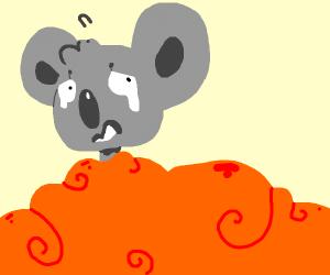A koala drowns in an orange beard