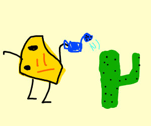 Cheese is watering their cactus
