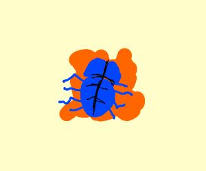 Splatted Bug