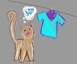 Cat looking at shirt