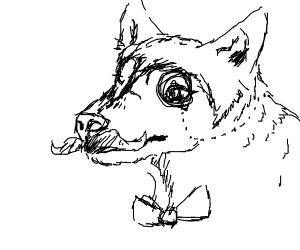 Fancy Husky