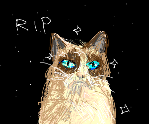grumpy cat in space (rest in peace)