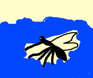 mosquito under water