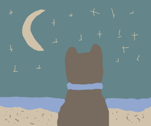 dog watching the moon at the beach