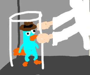 Dr. Doofenshmirtz Captures Perry