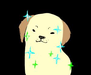 Sparkly Dog