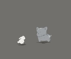 white bunny looks at grey dog?