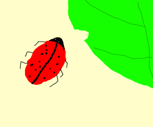 Ladybug trying to eat a big leaf