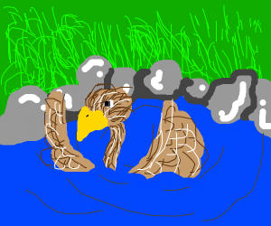 ostrich swimming