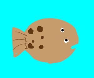 Flats the Flounder