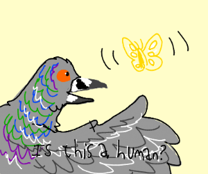 pigeon ask butterfly if she's a human