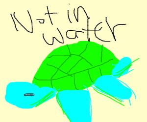 Land-sea turtle