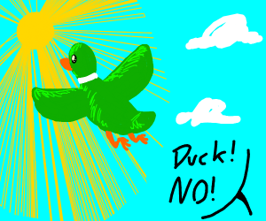 Duck flies into the sun.