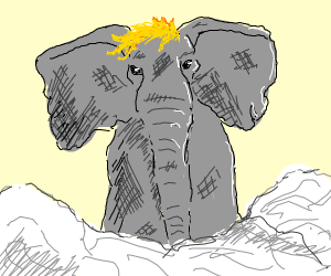 Elephant with Yellow Hair in Fog