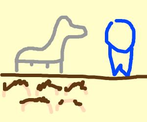 Llama auctioning a Ribbon