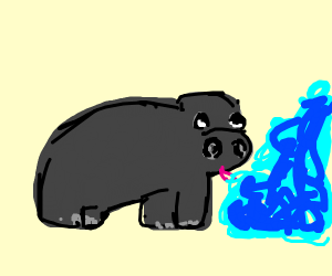 Hippo Drinking