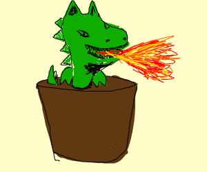 Dog Dragon Plant