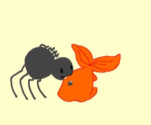 Spider catches goldfish