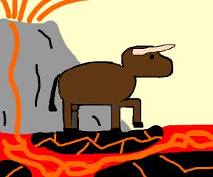 Ox crossing over Lava