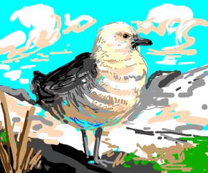 Bird in Antarctica