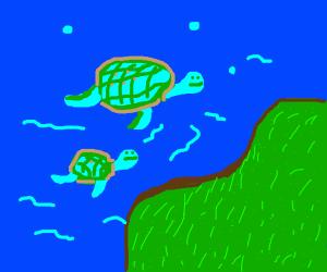 Turtles in water near grass