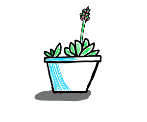 A cute little potted plant
