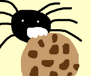 spider eating a cookie