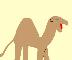 camel is tired of hump day