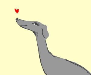 British greyhound