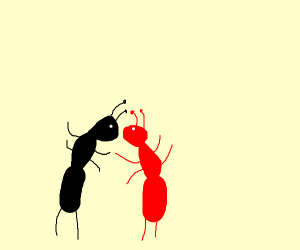 A black ant and a fire ant dancing