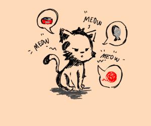 Demanding kitty