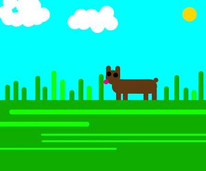 Doggo licking grass