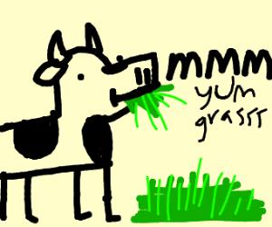Cow aten grasssss