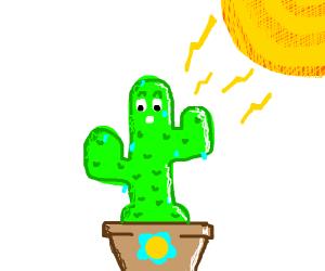 Sweaty cactus