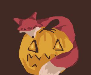 Cute fox standing on a jack o' lantern