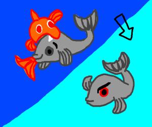 Evil goldfish turns fish evil