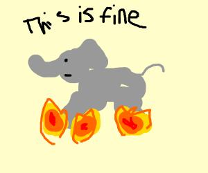 Elephants feet are in fire! AAAAH!!!