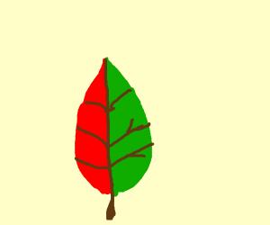 1/2 autumn leaf, 1/2 summer leaf