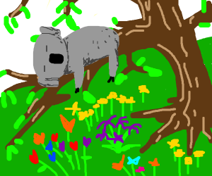 a koala in a tree over some flowers