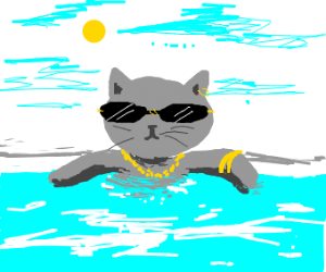 the coolest cat in town