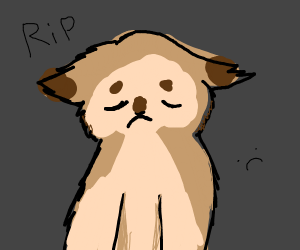 Memorial to grumpy cat
