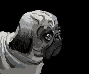 Very sad pug