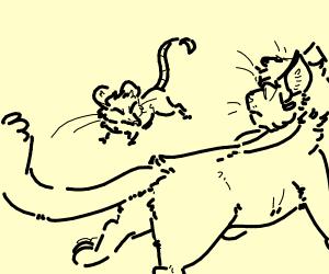 the cat vs the rat