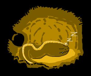 Sleepy eel