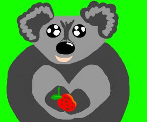 koala asks if you want a berry