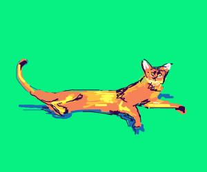 Coupari Cat
