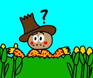 Scarecrow lost in a cornfield