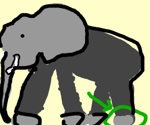 Elephant's Foot