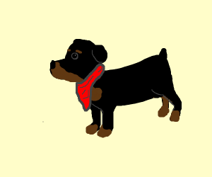 rottweiler with red bandanna