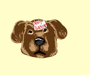 "dog head says ""just shoot"""